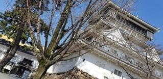 建物の前に大きな木の写真・画像素材[3258515]