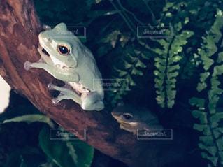 カエルのひと休みの写真・画像素材[3258854]