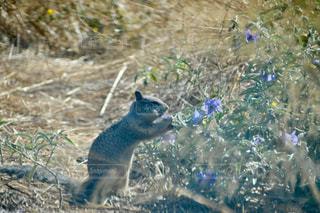 草の中に立っているクマの写真・画像素材[749621]