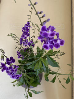 紫色の花を持つ花瓶の写真・画像素材[3260346]