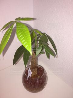植物に花を咲かせる花瓶の写真・画像素材[3298358]