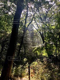 木漏れ日の写真・画像素材[3262491]
