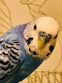 鳥カゴの上に乗っているインコの写真・画像素材[3268175]