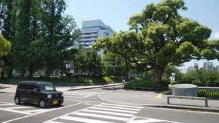 県庁周辺散策の写真・画像素材[3333855]