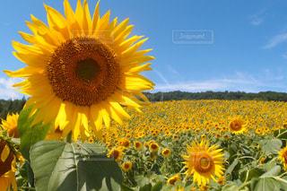 花の写真・画像素材[704705]