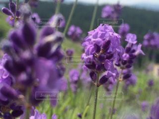 花の写真・画像素材[704733]