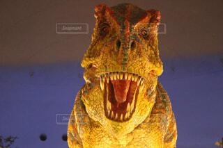ティラノサウルスの写真・画像素材[4627317]