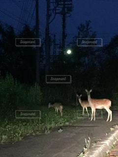 動物の写真・画像素材[145791]