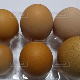 卵の背比べの写真・画像素材[3313854]