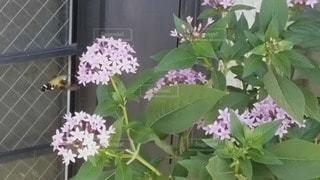 ハチドリみたいの写真・画像素材[3364328]