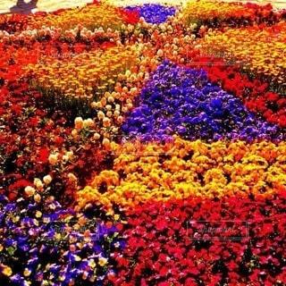 お花畑の写真・画像素材[3275975]