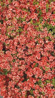花の写真・画像素材[3337920]