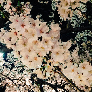 自然の写真・画像素材[136955]