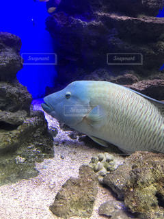 水面下を泳ぐ魚たちの写真・画像素材[841340]