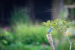 草の上に座っている鳥の写真・画像素材[3625423]