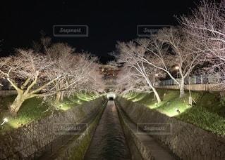 木のクローズアップの写真・画像素材[3279259]