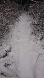 野うさぎの足跡の写真・画像素材[3276579]