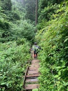森の中の人の写真・画像素材[3366484]