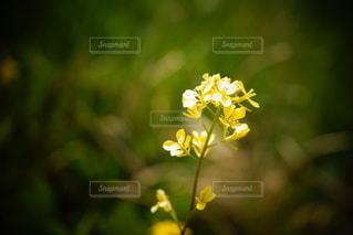 黄色い花のクローズアップの写真・画像素材[3273469]