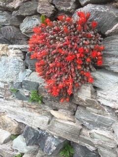 佐多岬半島の珍しい石積みの写真・画像素材[3274334]