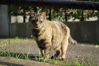 猫の写真・画像素材[3332910]