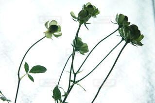 窓辺の花の写真・画像素材[3333448]