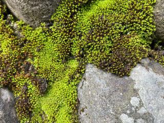 苔のクローズアップの写真・画像素材[3405749]