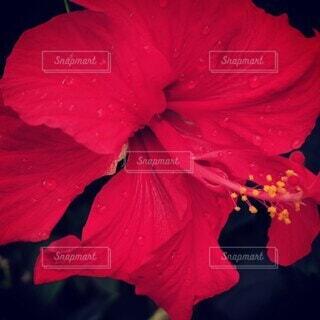 花を持っている人の写真・画像素材[4241598]