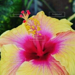 花のクローズアップの写真・画像素材[4319632]