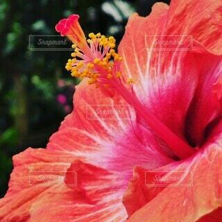 花のクローズアップの写真・画像素材[4319643]