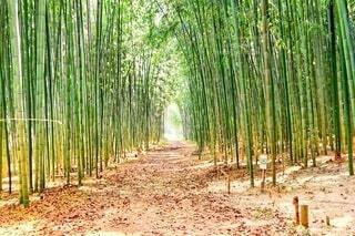 光が差し込む明るい竹林の写真・画像素材[3622537]