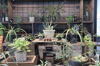 お洒落な棚に飾られた観葉植物と雑貨の写真・画像素材[4226032]