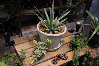 お洒落な観葉植物の写真・画像素材[4226056]