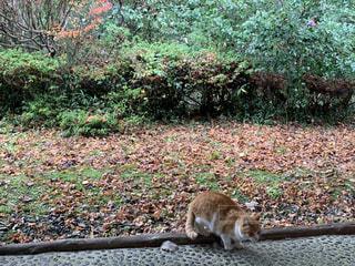 庭に座っている猫の写真・画像素材[3301235]