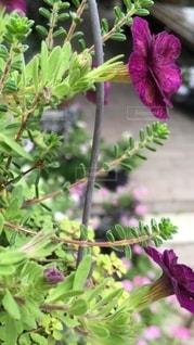 雑貨店のお花の写真・画像素材[3323119]