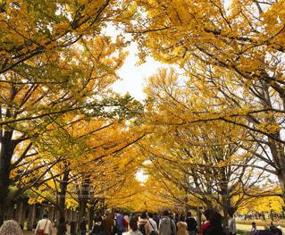 木の隣に立っている人のグループ - No.706712