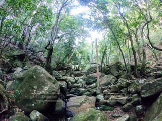 大きな岩の前の木の写真・画像素材[3279827]
