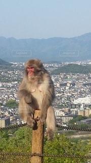 エサをもらう猿の写真・画像素材[3280081]