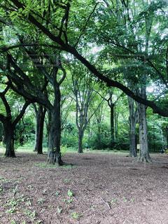 公園の写真・画像素材[4598254]