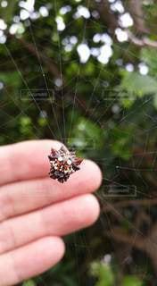 クモの写真・画像素材[3296414]
