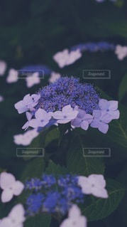 凛としての写真・画像素材[3282742]