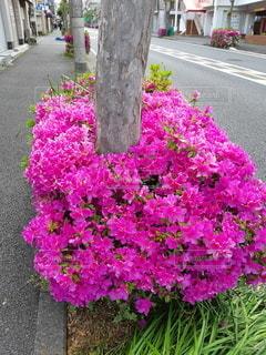 花園のクローズアップの写真・画像素材[3303937]