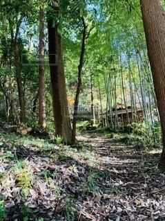 竹やぶの坂道の写真・画像素材[3321571]