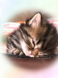 眠そうな子猫の写真・画像素材[3331881]