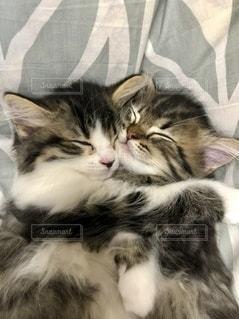 ベッドに横たわる猫の写真・画像素材[3347139]