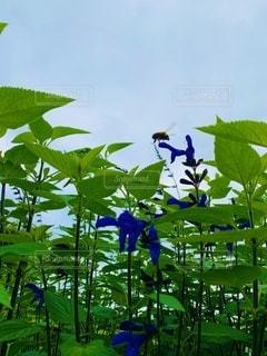 紫色の花と緑の葉の写真・画像素材[3357435]