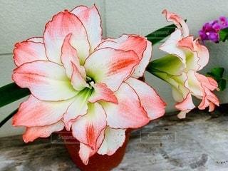 花のクローズアップの写真・画像素材[3357438]