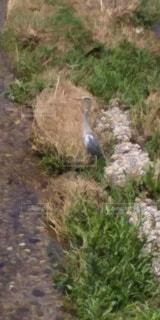 鳥の写真・画像素材[3345250]