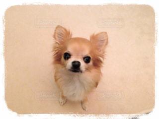 犬の写真・画像素材[137590]