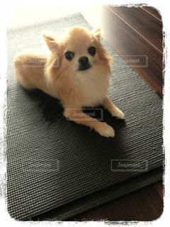 犬の写真・画像素材[137630]